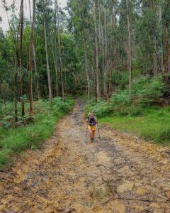 pourquoi utiliser des bâtons de randonnée - blog randonnée