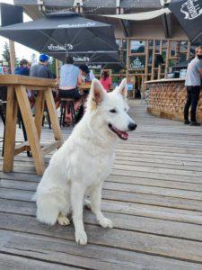 Folie Douce les Arcs - berger blanc suisse